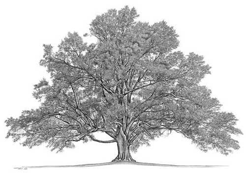 древо-жизни
