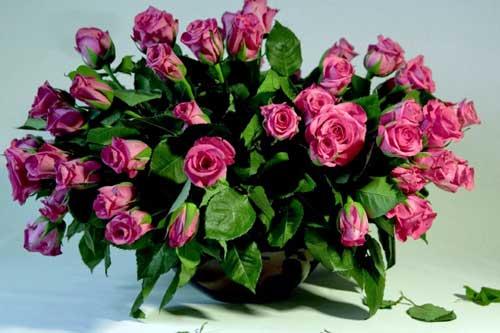 розовая-свадьба