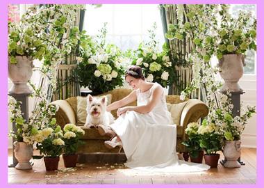 Невеста с собачкой