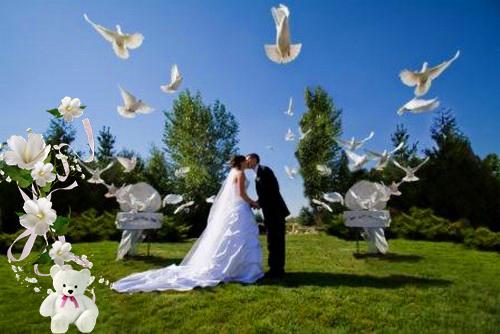 Запуск белых голубей на свадьбе