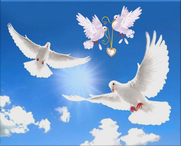 Проффесиональные свадебные голуби