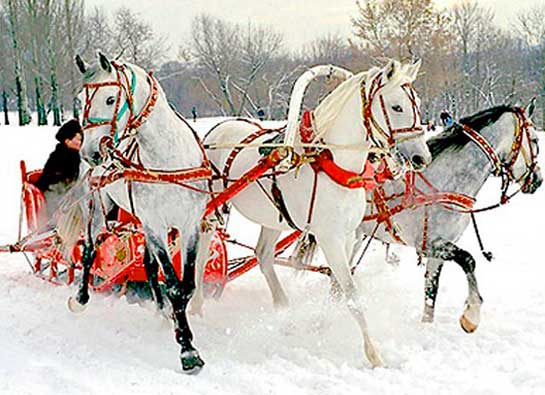 Лошади на зимней свадьбе