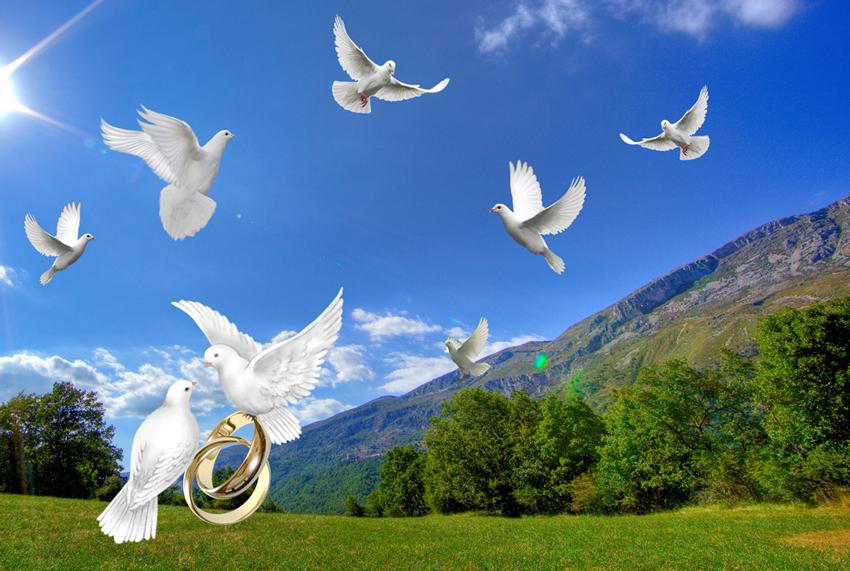Белые свадебные голуби