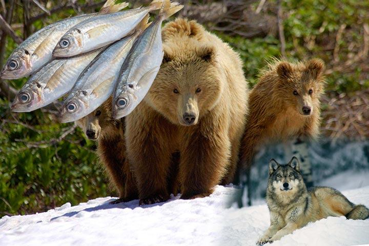 К чему снятся медведь, волк или рыба?