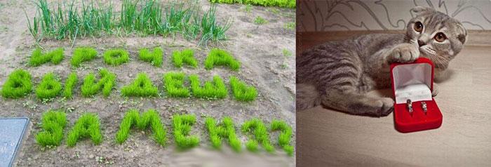 Предложение замуж из травы