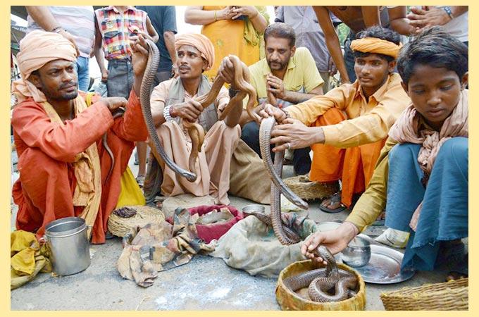 Индусы и змеи