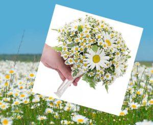 Свадебный букет из ромашек – нежность и элегантность, выраженные цветами