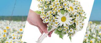 не стоит заблуждаться, что свадебный букет из ромашек слишком незатейлив